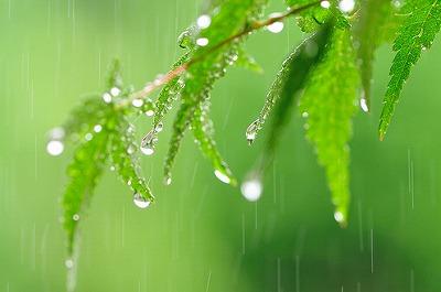 梅雨の季節