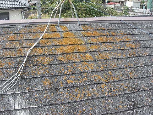 現在の屋根の状況北面コケ