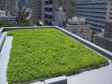 屋上緑化_R