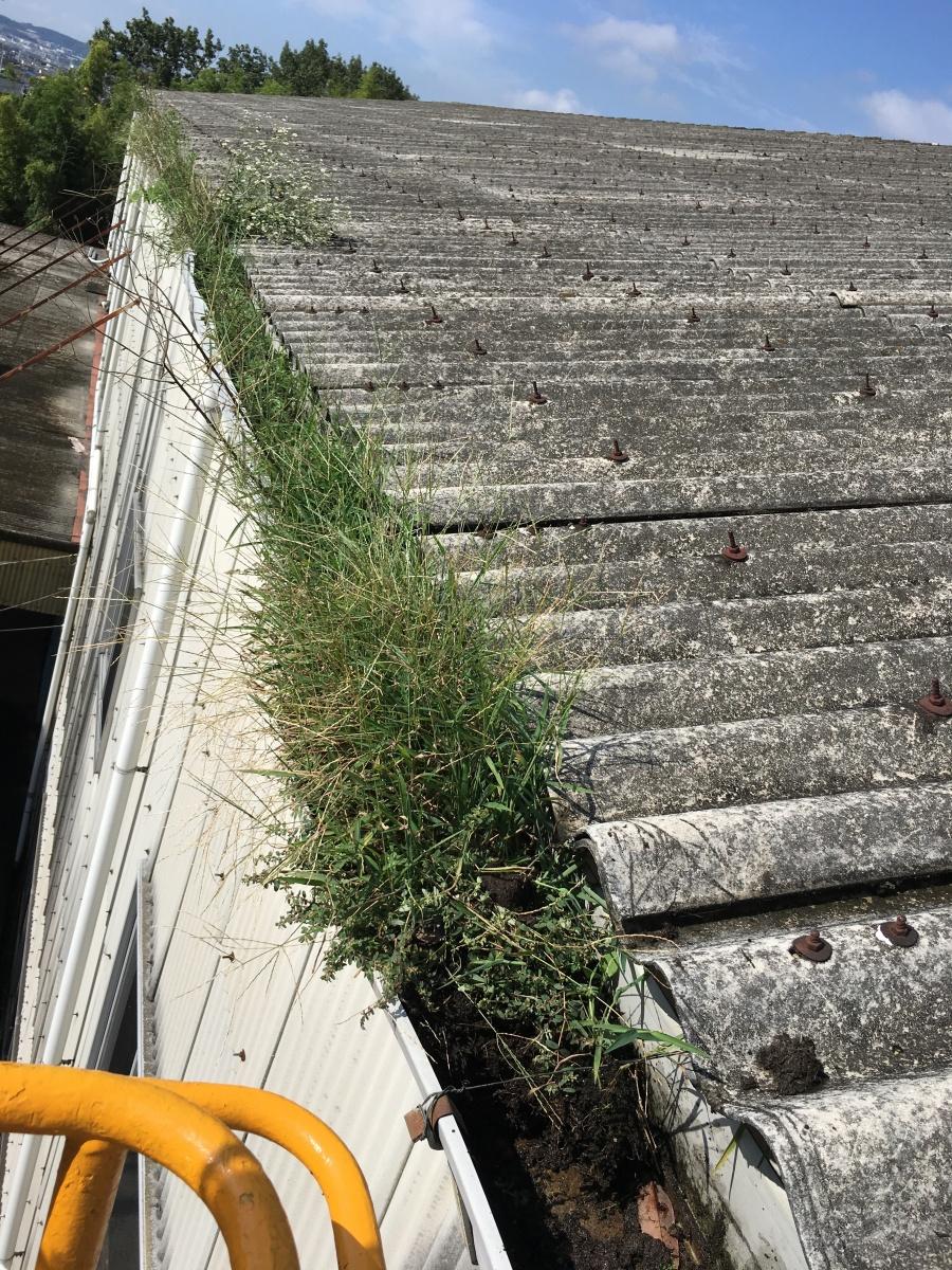 草が生えた雨樋